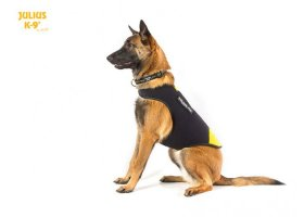 IDC neoprene dog jacket