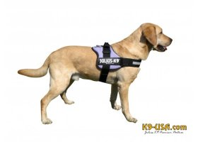 Julius K9 powerharnesses -purple- discontinued model!